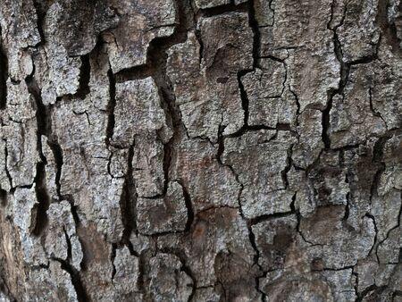 Bark tree texture close up photo with tree skin cracks