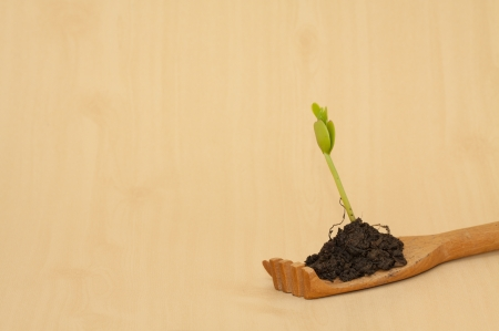 Green seedling plant with soil in wooden hand photo