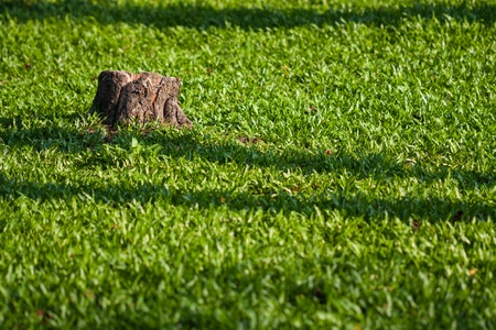 Lonely tree stump with green grass in the morning Reklamní fotografie