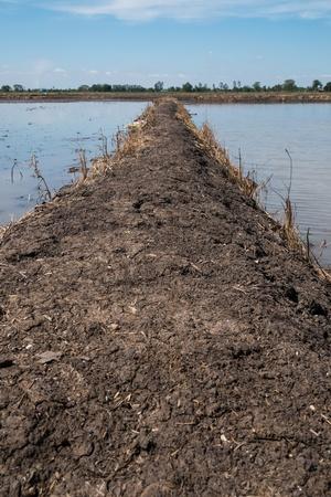 Ridge between water in the rice field photo