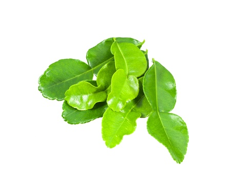 Kaffir lime leaves isolated on white with clipping path photo