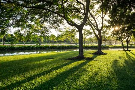 rama: Beautiful Green lawn of Suan Luang Rama 9 Park in the morning