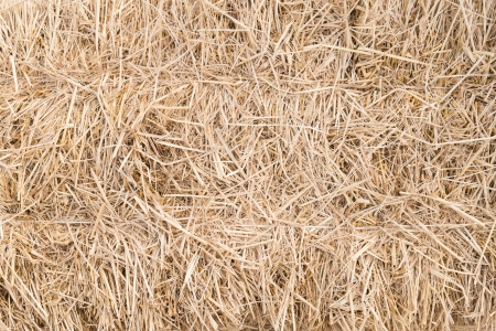 Draw Straw natural texture background