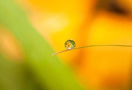 dewdrop: Round Dewdrop  Droplet  with flower reflection on little leaf