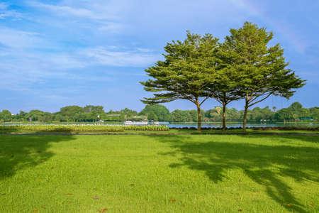 public park: �rboles en Suan Luang Rama 9 parque p�blico, Escena de la ma�ana