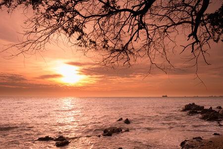 horizonte: Salida del sol sobre el horizonte del mar con la silueta de la rama de �rbol, Samaesarn, Sattahib, Chonburi, Tailandia Foto de archivo