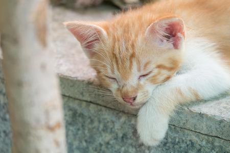 Cute White Orange Kitten Sleeping on Marble Floor