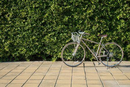 Vintage Bike on Sidewalk with Green Leaves Backdrop, Sport or Recreation concept