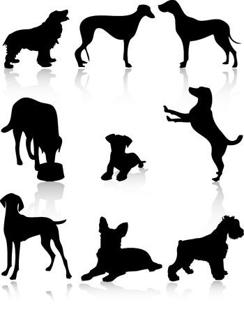 Black dogs over white