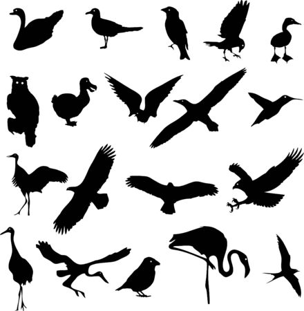 oiseaux en noir sur un fond blanc  Banque d'images - 6774514