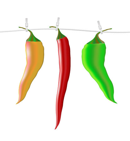 Chili peppers on a rope vector illustration Vector