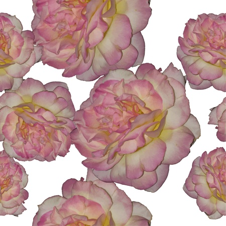 Vector seamless rose background Stock Vector - 12927300
