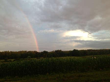 Rainy field  Stock fotó