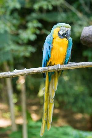 pappagallo ara allo zoo photo