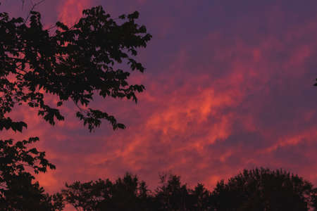 Pink sunset through the trees.