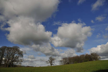 cumuli: Clouds and sky and trees