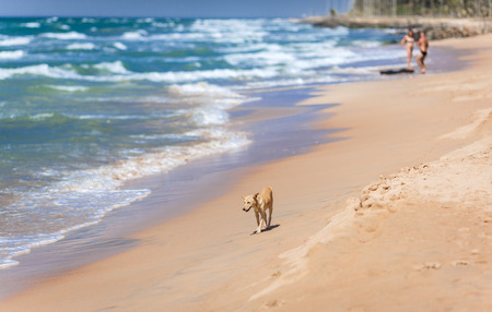 Lonely small sad dog on the beach on the background of waves and couple in defocusing.