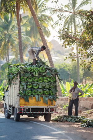 Loading of clusters of green bananas on branches on the small truck for transportation to places of sale. India, Karnataka, vicinities of Hampi, on January 10, 2018.