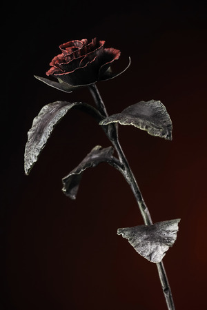 The fine rose with a red blossom in light on the dark-red background. Stock Photo