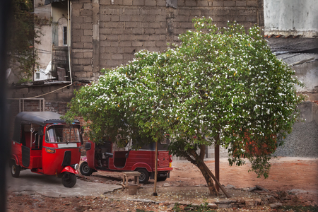 Two red tuk-tuk stand in the city, under the blossoming jasmine tree. Stock Photo