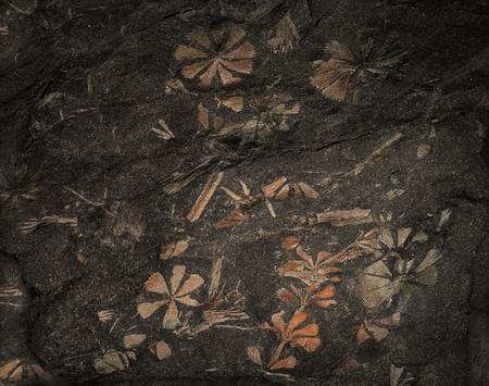 Flowers, stalks and leaves of ancient prehistoric plants have hardened in a piece of coal and have been got through many millions of years when mining stone coal.