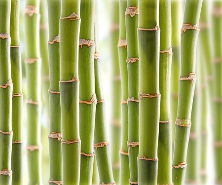 bamboo background: Bamboo Jungle Stock Photo