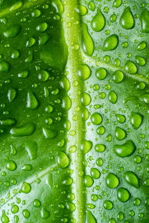 Beautiful green leaf with shiny drops