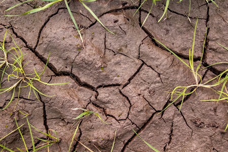Dirt with cracks and grass photo