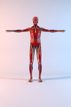 Complete human body with opened arms on white background photo