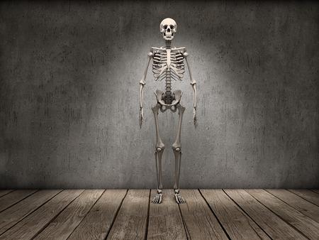 Full skeleton staring on a room