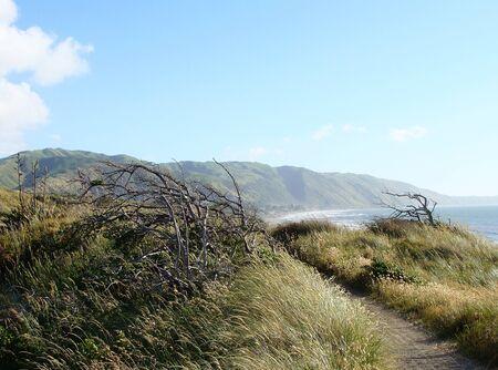 coastline: coastline walkway-I New Zealand