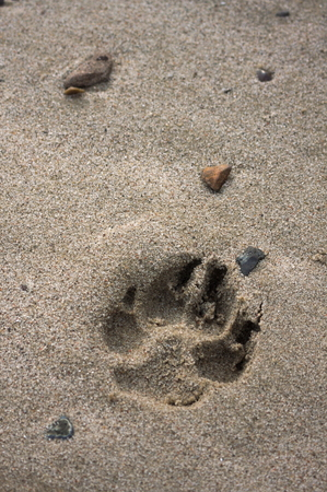 Dog track in the sand river Stock Photo