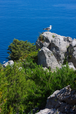 paradise island-XI-Capri-Italy Stock Photo