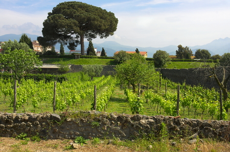 Winery Pompeii II-Campania-Italy