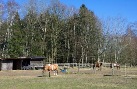Wittmoor - un prado en el borde del bosque -I - Foto de archivo