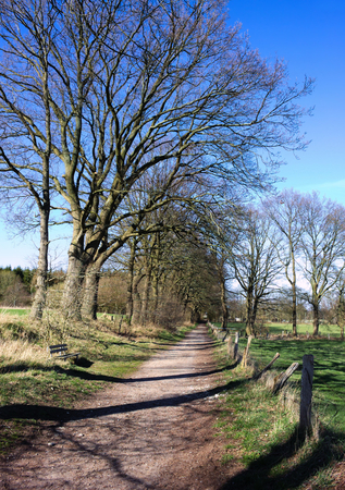 Wittmoor - gnarled trees at the alley -III -