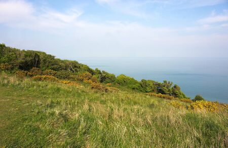 Eastbourne - Beachy Head - meadow - VI -