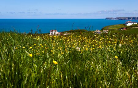 Flower field at the coast - Tintagel - Cornwall