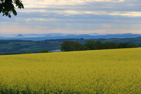 Rape field with view of the Saxon Switzerland