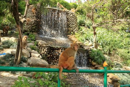 Macaque Monkeys in a Temple in Kathmandu in Nepal, Monkey Stock fotó