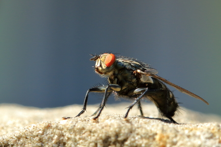 A Fly on a Sandstone Wall
