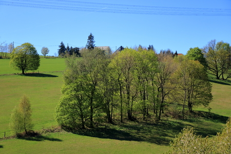 A Scenic view of green trees and bushes against a blue sky