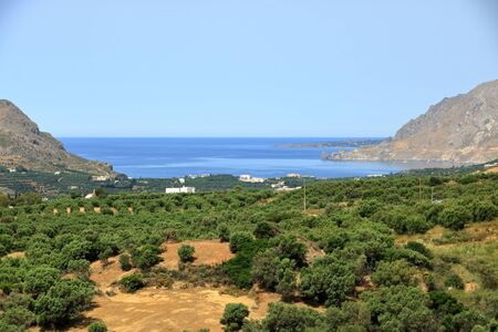 Olive plantations in Crete ,Greece, Europe 스톡 콘텐츠