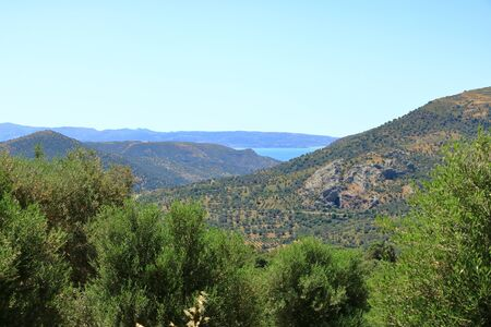 Olive plantations in Crete, Greece in Europe