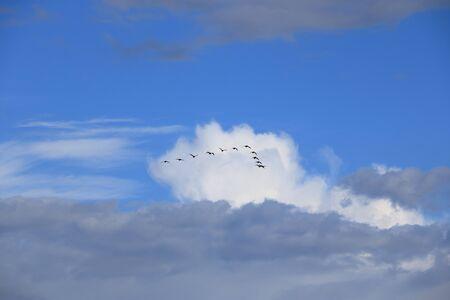 Vol d'oiseaux volant dans la formation en V Banque d'images
