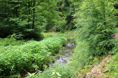 Mountain river flowing through green forest
