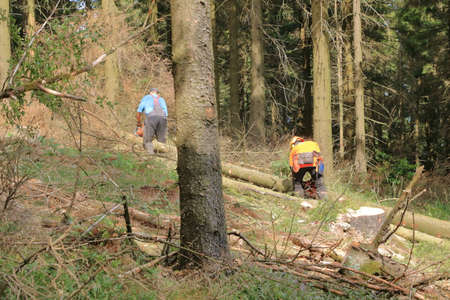 Two forest workers as lumberjack in protective clothing and with a chainsaw in the forest