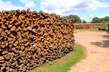 Woodpile of freshly harvested spruce logs. Trunks of trees cut and stacked in forest. Wooden logs