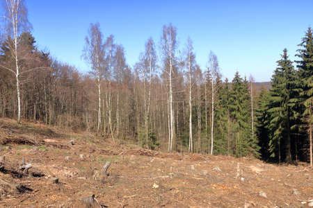 Pine tree forestry exploitation in a sunny day. The stumps and logs show that overexploitation leads to deforestation endangering environment and sustainability.