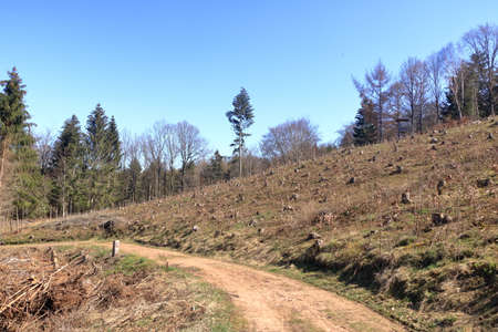 A Forestry plantation and young new planted trees farming growing panoramic view landscape 免版税图像